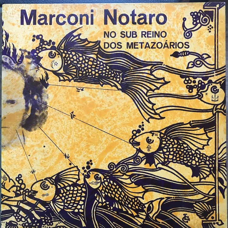 Full marconi notaro front
